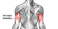 Triceps Hypertrophy Workouts