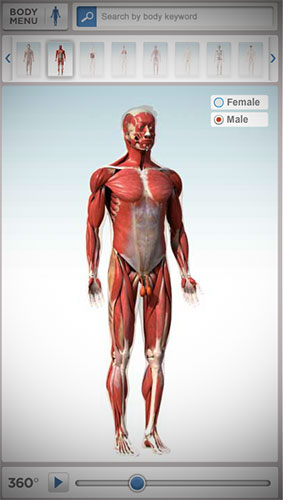 Interactive-Human-Anatomy-Atlas-Body-Maps
