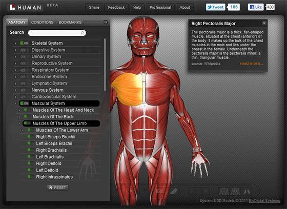 free interactive 3d human anatomy atlases - all things gym, Muscles