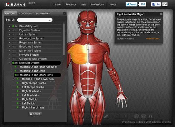 interactive human 3D anatomy Atlas BioDigital