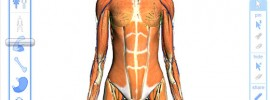 Google-body-browser-interactive-anatomy-atlas