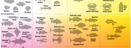 Seafood Infographic Omega 3 Content vs. Mercury Levels