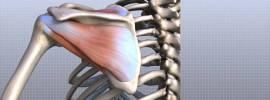 Anatomy Video Tutorials